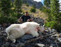 2016 Mountain Goat Hunt