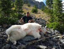 2016 Mountain Goat Hunt